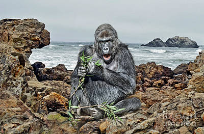 Photograph - A Silverback Gorilla Down By The Shore  by Jim Fitzpatrick