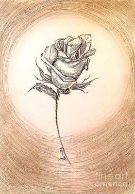 Roses Drawings - A Simple Rose by Nermine Hanna