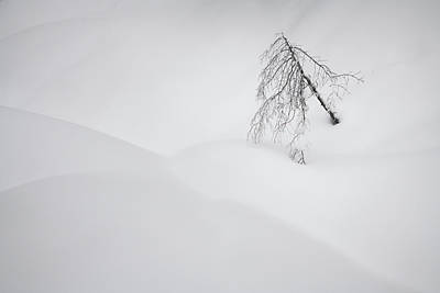 Photograph - A Simple Tree by Adam Gibbs