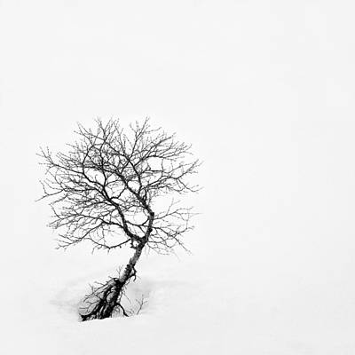 Photograph - A Simple Tree by Dave Bowman