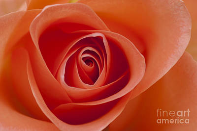 Photograph - A Single Bloom 5 by Wendy Wilton