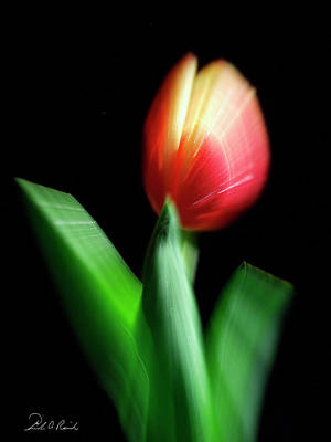Abstract Movement Photograph - A Single Bloom by Frederic A Reinecke