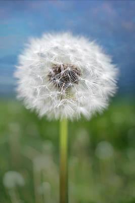 Photograph - A Single Dandelion Seed Pod by Robert FERD Frank