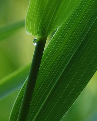 Photograph - A Single Drop by I'ina Van Lawick