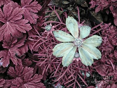 Photograph - A Single Flower by Marcia Lee Jones