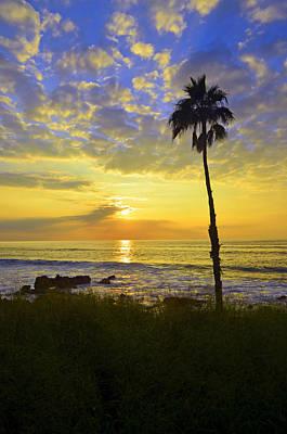 Photograph - A Single Palm Tree At Kepuhi Beach by Tara Turner