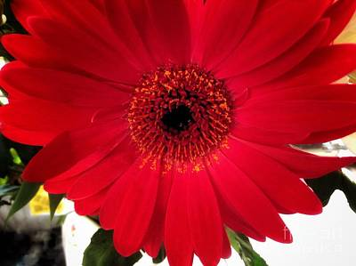 Photograph - A Single Red Gerbera by Joan-Violet Stretch