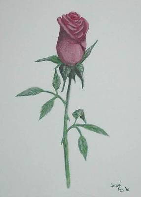 Art Print featuring the painting A Single Red Rose by Hilda and Jose Garrancho