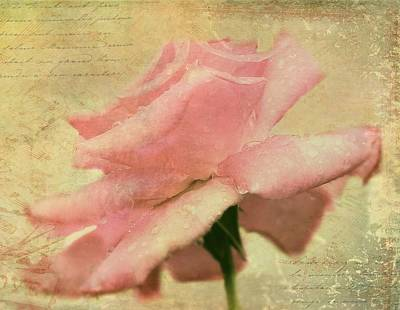 A Single Rose Art Print by Kathy Jennings