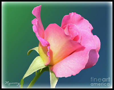 Digital Art - A Single Rose by Mariarosa Rockefeller