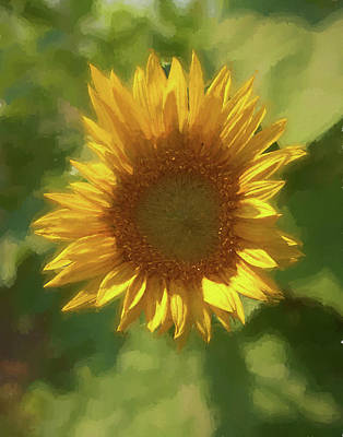 Photograph - A  Single Sunflower Blossom by Rusty R Smith