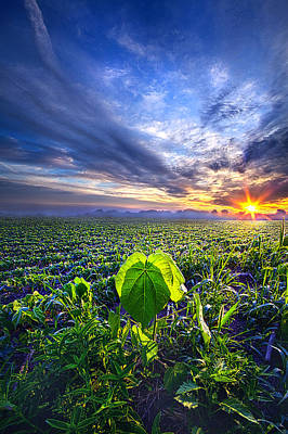 Photograph - A Single Thought by Phil Koch