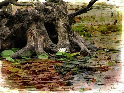 Digital Art - A Single Water Lily Growing In Front Of Old Stump And Surrounde by Rusty R Smith