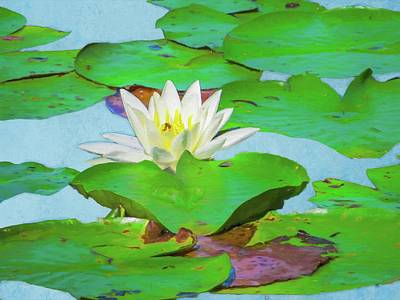 Digital Art - A Single Water Lily Blossom by Rusty R Smith