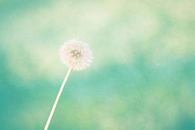 Aqua Blue Photograph - A Single Wish by Amy Tyler