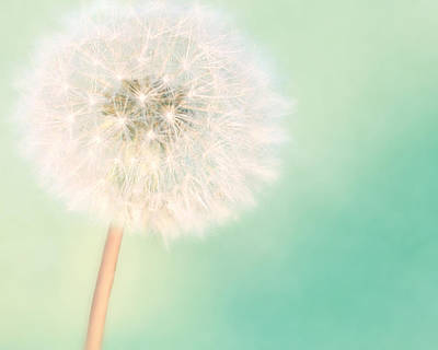 Dandelion Photograph - A Single Wish II by Amy Tyler