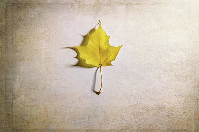 Abstract Expressionism - A Single Yellow Maple Leaf by Scott Norris