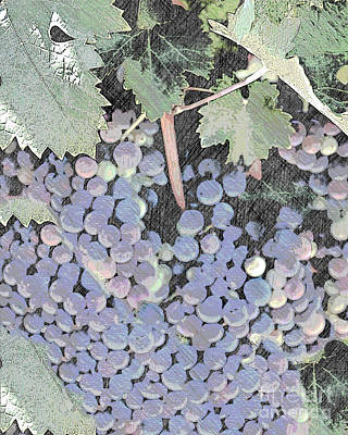 Photograph - A Sketch Of Grapes On The Vine by Sherry Hallemeier