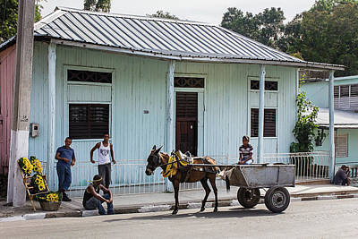 Photograph - A Slower Pace by Dawn Currie