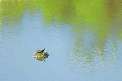 Digital Art - Small Painted Turtle In A Big Pond by Rusty R Smith
