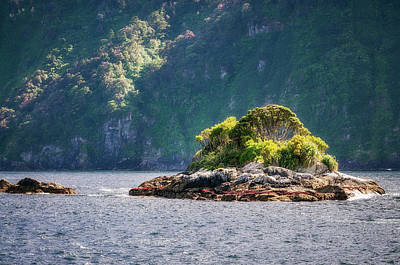 Photograph - A Small Rocky Island At Doubtful Sound by Daniela Constantinescu