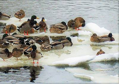 Photograph - A Snowy Bunch by Jewels Blake Hamrick