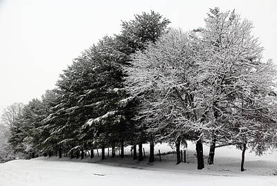 Photograph - A Snowy Day by Allen Nice-Webb