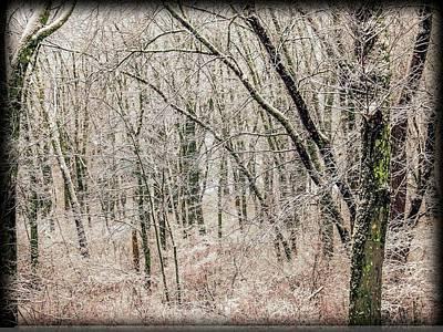 Digital Art - A Snowy Forest by Rusty R Smith