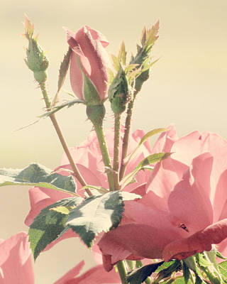 Soft Pink Photograph - A Soft Sweet Note by Amy Tyler