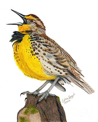 Meadowlark Drawing - A Solitary Song by Cathleen Lengyel