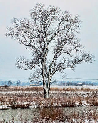 A Solitary Tree In Winter Art Print