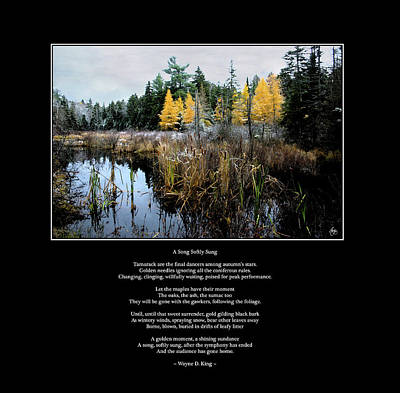 Photograph - A Song Softly Sung by Wayne King