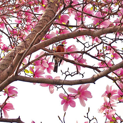 Florals Photograph - A Songbird In The Magnolia Tree by Rona Black