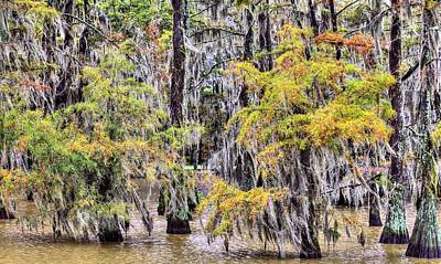 Photograph - A Southern Autumn by JC Findley