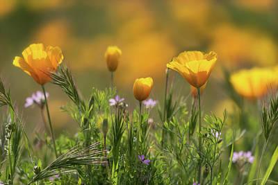 Photograph - A Southwest Spring  by Saija Lehtonen