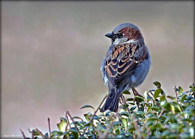 Photograph - A Sparrow In The Sun by Suzanne Stout