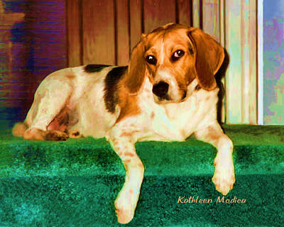Photograph - A Special Beagle by KLM Kathel