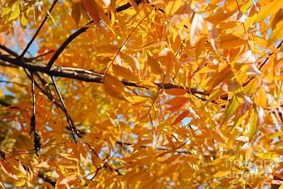 Pistache Tree Photograph - A Splash Of Autumn by DiDi Higginbotham