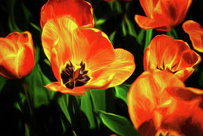 Tulip Flowers Photograph - A Splash Of Color by Tom Mc Nemar