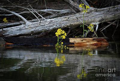 Photograph - A Splash Of Yellow by Douglas Stucky