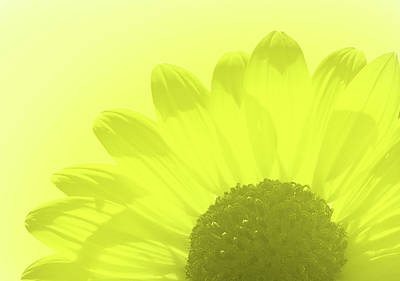 Photograph - A Splash Of Yellow by James Granberry
