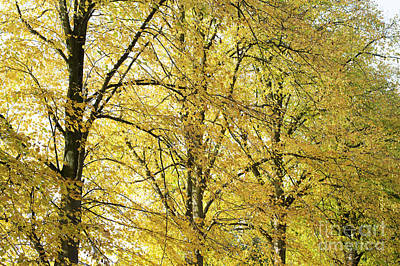 Leaves Changing Photograph - A Splash Of Yellow by Tim Gainey