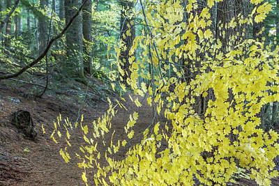 Photograph - A Splay Of Fall Leaves On A Forest Trail by Belinda Greb