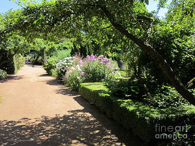 Photograph - A Spot Of Shade by Kathie Chicoine