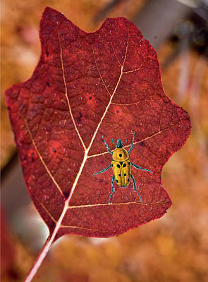 Photograph - A Spot Of Yellow On A Leaf by Douglas Barnett
