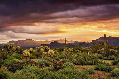 Photograph - A Spring Sunrise In The Sonoran  by Saija Lehtonen