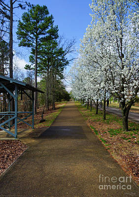 Photograph - A Spring Walk by Jennifer White