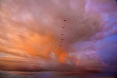 Photograph - A Squadron Of Brown Pelicans  by John Harding
