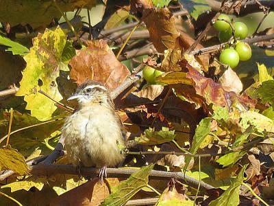 Antique Maps - A Squatty Sparrow Sunbathes Amongst the Autumn Grape Vines by De Ann Troen
