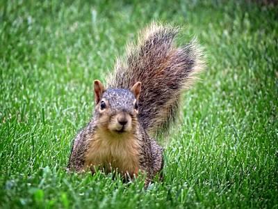 Photograph - A Squirrel Surprise by Kyle West